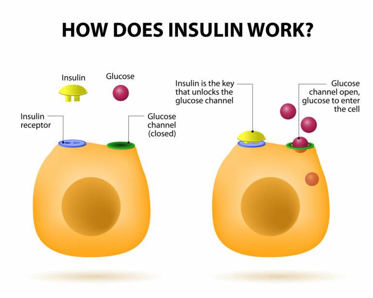Meccanismo Insulina-Glicemia