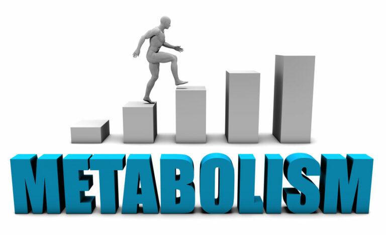 Come funziona il metabolismo?