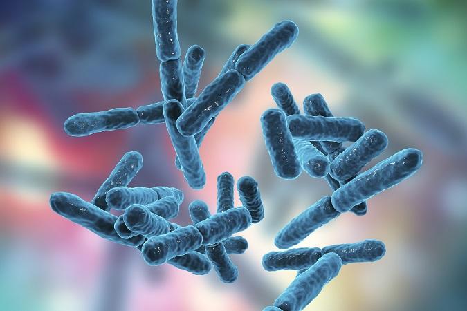 Dimagrire con la FLORA batterica intestinale
